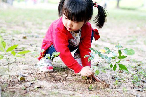 植树3_副本.jpg