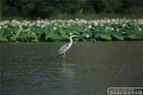 铜川福地湖2.webp.jpg
